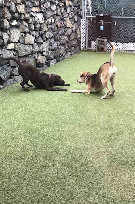 north shore dog daycare