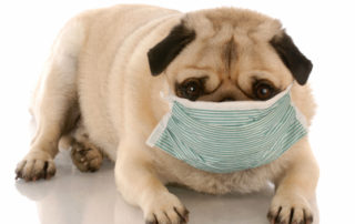 Learn about kennel cough from Melrose dog daycare, Dogwood Cottage