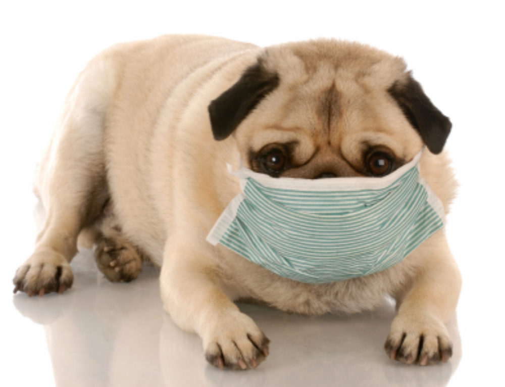 Kennel Cough: Be Aware, Be Prepared