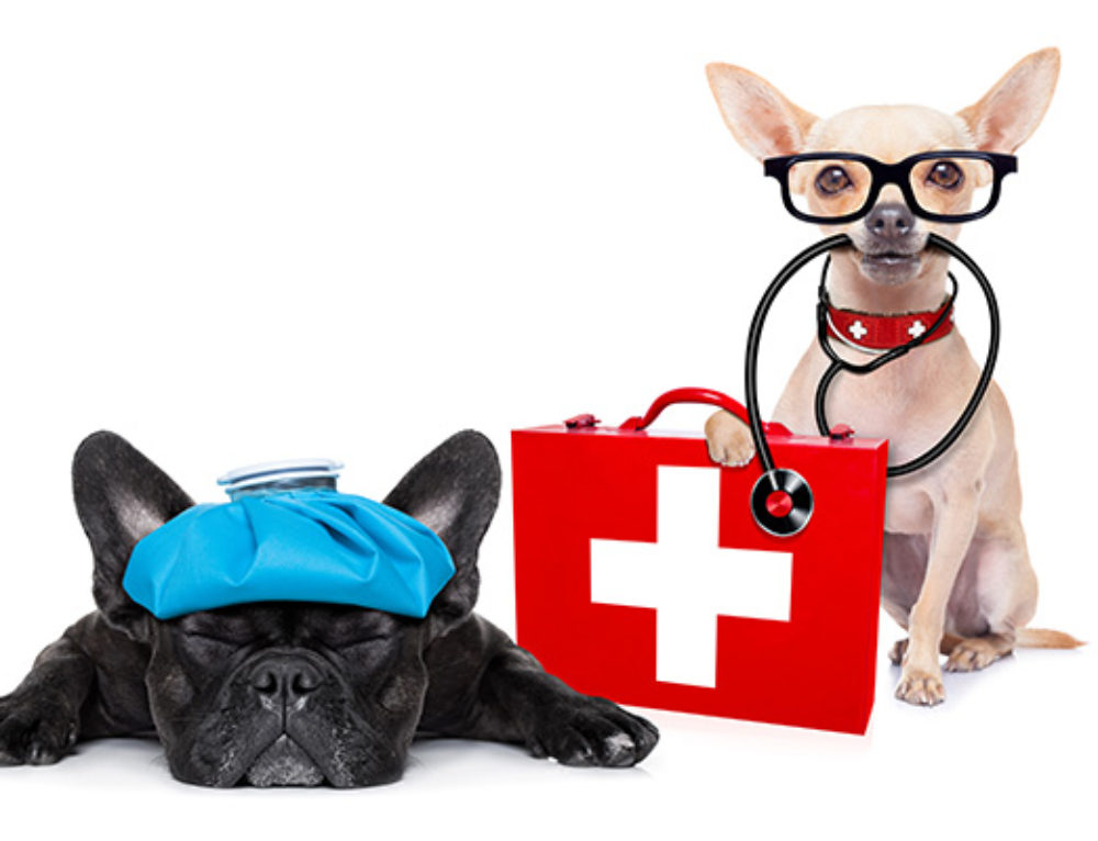 April is Pet First Aid Month!