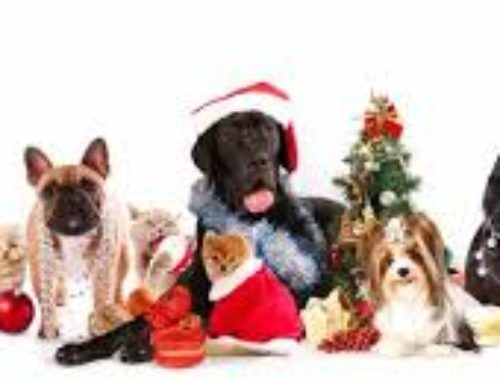 Holiday Drive for the Northeast Animal Shelter