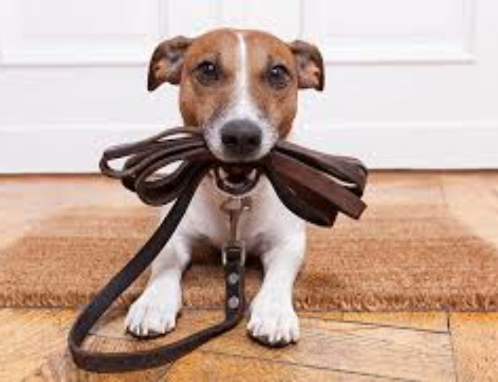 The Scoop: January is Walk Your Dog Month!