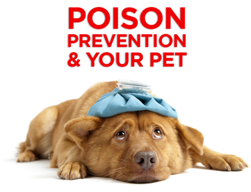Pet Poison Prevention Week